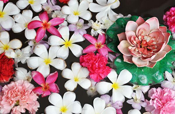 水に浮かぶたくさんの花